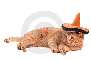 image of cat wearing sombrero